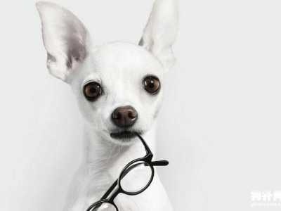 狗狗剃毛后注意事项 使用宠物剃毛器需要注意什么