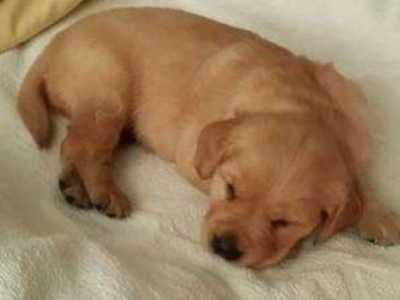 狗狗趴主人身上睡觉 狗狗为什么喜欢趴在主人腿上